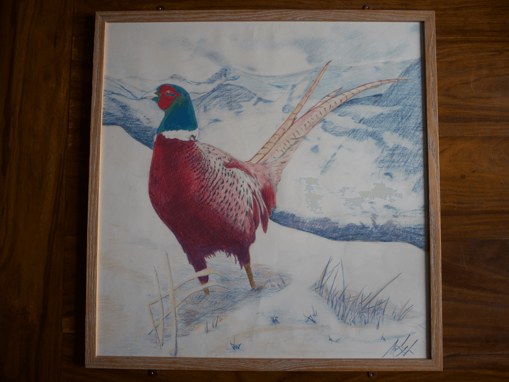 Mark Lewis Drawings-Pheasant